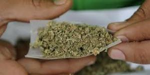 L'Allemagne autorise l'usage thérapeutique du cannabis