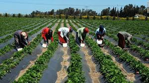 Agriculture durable et sécurité alimentaire: L'UE accorde un appui budgétaire de 12,399 milliards FCFA