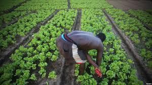 Cocody, quartier chic d'Abidjan, organise sa mue contre le réchauffement climatique