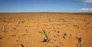 La famine sévit dans une partie du Soudan du Sud