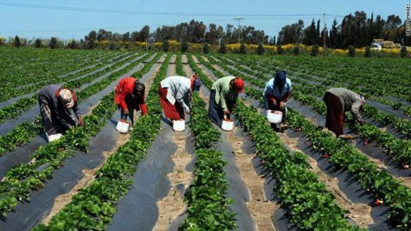 SEMENCES ET INTRANTS : Des agriculteurs sénégalais boostent leurs rendements, selon Syngenta