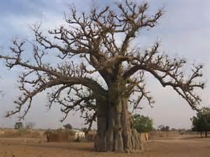 Le silence coupable des marabouts du Sénégal