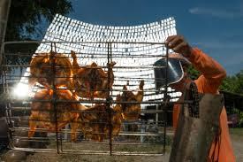 En Thaïlande, le poulet solaire devient populaire