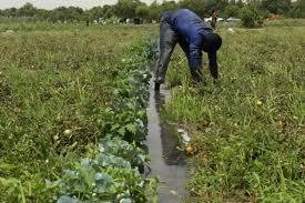 Les agriculteurs du nord-est du Nigeria veulent rentrer chez eux