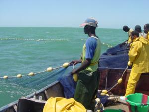 Accord avec la Mauritanie: 50 mille tonnes de poissons promis aux pêcheurs sénégalais
