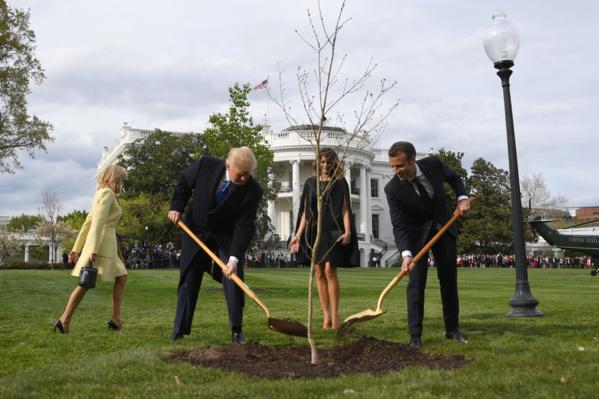 L'arbre symbolisant l'amitié Macron-Trump n'a pas survécu