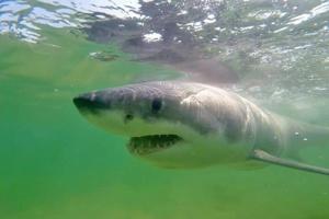 Australie: un homme tué par un requin