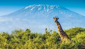 En Tanzanie, l'incendie sur les flancs du Kilimandjaro est circonscrit
