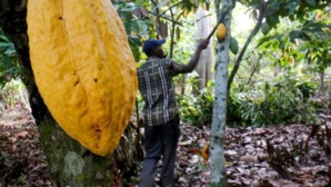 Abidjan lève les sanctions contre le chocolatier Hershey