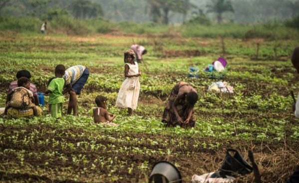 L'ONU lance une chasse aux startups et aux entreprises qui changent l'image des systèmes alimentaires (communiqué)