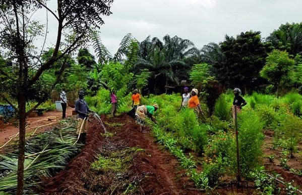 Un demi-milliard d'Africains menacés d'insécurité alimentaire par les maladies des plantes agricoles