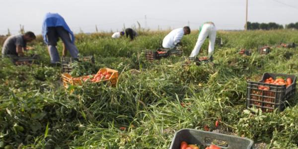 Exploités, battus, drogués : Le calvaire des ouvriers agricoles étrangers en Italie