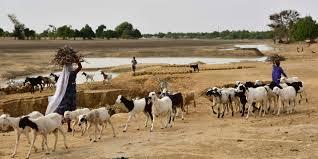 Niger: 18 morts dans des affrontements entre éleveurs et agriculteurs dans l'Ouest