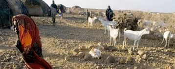 Afrique de l'Est: la sécheresse fait grimper les prix des produits alimentaires