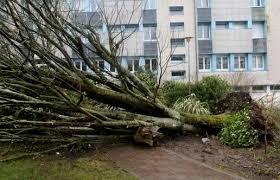 Tempête Zeus: deux morts et jusqu'à 600.000 foyers plongés dans le noir