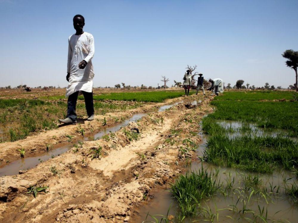 Nigeria: Le conflit fermiers-bergers fait des milliers de déplacés