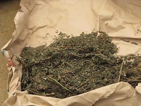 Les douaniers saisissent près de 400 kilogrammes de chanvre indien, dimanche et lundi