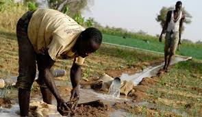 La Banque mondiale alloue 60 millions de dollars pour renforcer la résilience de l'agriculture en Afrique (communiqué)