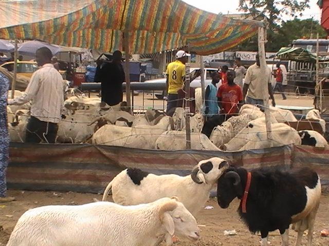 TABASKI 2021: Liste des points de vente de moutons autorisés dans la région de Dakar