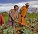 Agriculture en Afrique : un marché de 1000 milliards de dollars pour remplacer les mines par l'alimentaire (rapport)