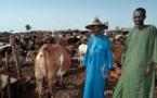 Centre du Mali: au moins dix morts dans des violences intercommunautaires