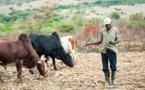 Étude de l'ONU : La numérisation des paiements des agriculteurs contribue à lutter contre la pauvreté au Kenya
