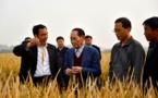 Record du monde de récolte pour le « super-riz » chinois