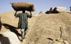 Conseil des ministres du 20 décembre 2017: la taxe à l'exportation sur l'arachide supprimée
