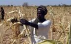 Insécurité alimentaire : 224 millions d'Africains encore sous-alimentés, s'inquiète l'ONU