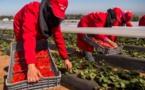"""Campagne agricole """"favorable"""" au Maroc, un vecteur de croissance"""