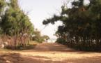 Lettre ouverte au ministre de l'Environnement : A propos de la forêt de Malika