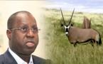 Affaire des gazelles oryx : la réponse du ministre de l'Environnement et du Développement durable
