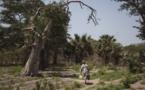Le Sénégal lance un projet de forêts nourricières et médicinales