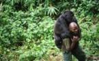RD Congo : Le parc des Virunga, théâtre d'un conflit sanglant
