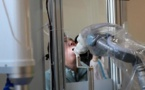 Chine : Un robot utilisé pour réaliser des tests Covid
