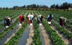 Une plateforme de conseils agricoles mise en place au profit de 84.000 producteurs sénégalais