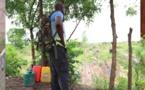Amadou Koné, ancien militaire devenu le premier maraîcher bio de Côte d'Ivoire