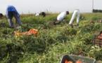 ITALIE - Exploités, battus, drogués : le calvaire sans fin des ouvriers agricoles étrangers