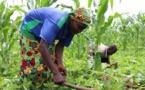 Centrafrique : le Conseil national de la jeunesse et la FAO encouragent la jeunesse à s'intéresser à l'agrobusiness