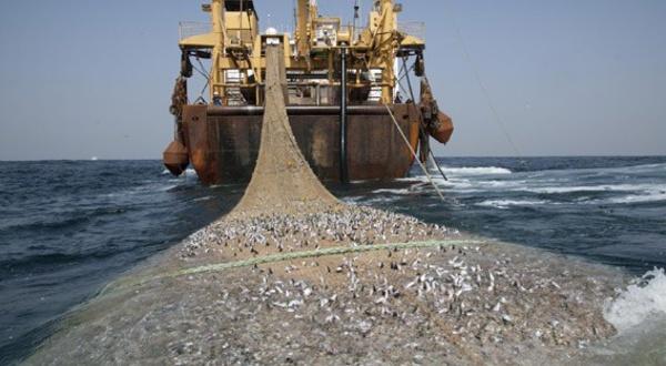 Pêche intensive en Afrique de l'Ouest : l'ampleur véritable du pillage des Européens et des Asiatiques